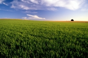 земеделие_1